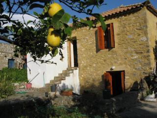 SALAMANDERS near AGIOS NIKOLAOS Peloponnese