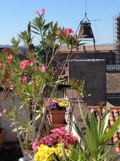 The pretty mediterranean flowers on the roof terrace.