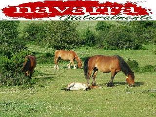 Casa Rural en Navarra Spain Para  Familias con Niños y Mascotas en la Naturaleza