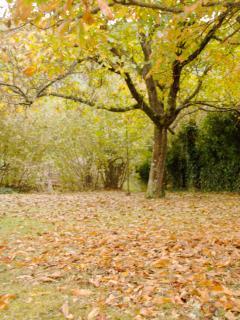 El otoño en Quinta Anita