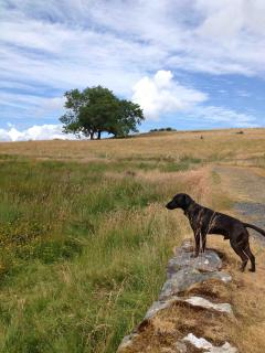 The Dog Off Lead Run Area