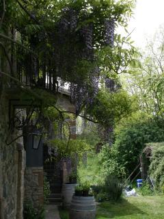 The wisteria on the western façade