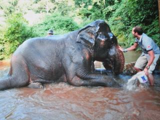 Elephant village homestay, Chiang Rai