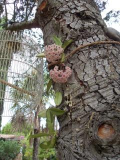 I fiori di cera