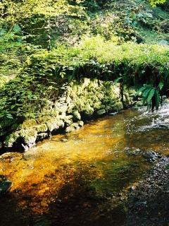 The local walks round Reelig Glen  and the 'Tall trees walk' are a 3 minute stroll from th