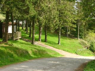 TreeTops - wooded area next to Chalet