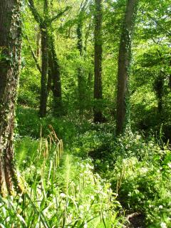 The wood on the Knowle Estate. Take a walk around the estate to see an abundance of wildlife.