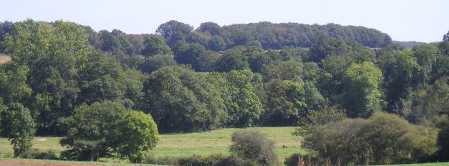 View across meadow