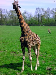 Cerza Wildlife Park (a 45-minute drive)