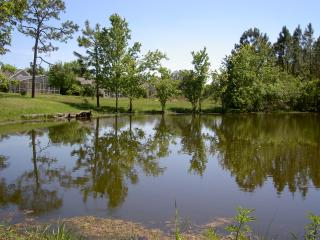 Pond behind the villa