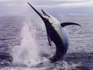 Grande pêche! Nous pouvons organiser la charte de pêche