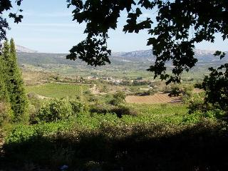 The vineyards 5 minutes walk
