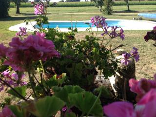 The pool looking through the Geraniums on the well.