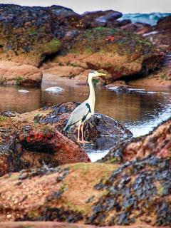 Fantastic Birdlife