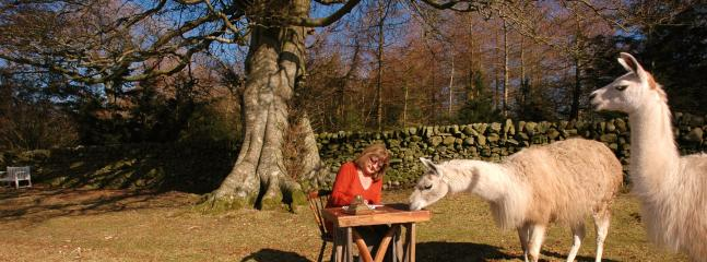 Writing in better weather - with advice from Oz