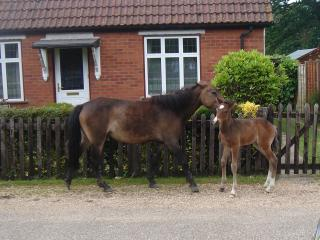 A mother and her foal outside the cottage (photo taken from the garden of Alpine Cottage)