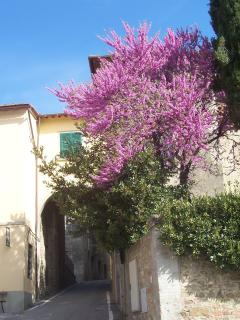 You reach the picturesque village 'Moncioni' within a 15 min. walk.
