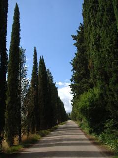 Approach to villa along cypress tree avenue