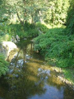 The stream again