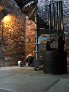 The farmer and his pigs in the york stone entrance hall