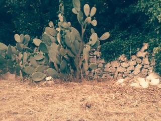 Vista retro giardino