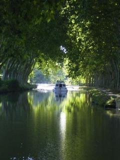 The 'green tunnel' of the Canal du Midi
