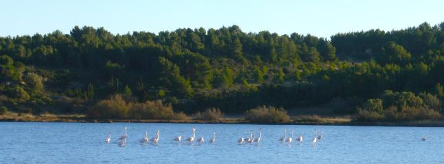 Pink Flamengos at Bages nearby