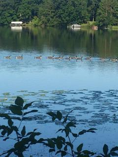 Our family of geese