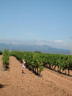 Local Vineyards in Languedoc