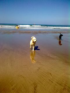 Eddie & Sula on Broad Haven beach
