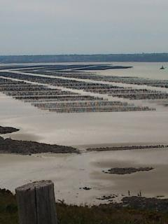 Mussell beds in the bay..........breath taking views when the tide is in or out!