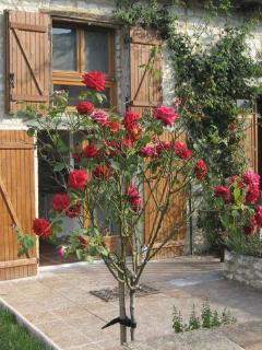 roses outside the kitchen door