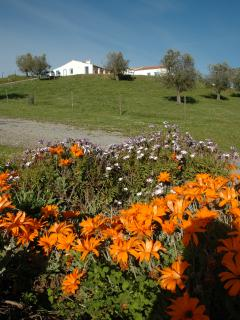 Monte do Telheiro's Spring Flowers and Olive Trees