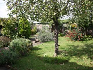 Spot the herbs in the mature rear garden