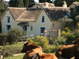 Casa Amarilla en el campo