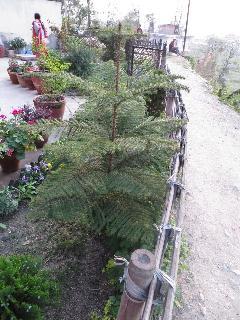 Garden & sorrundings