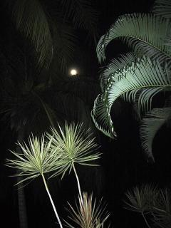 The Tropics at Night