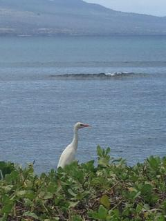 View from pool at BBQ area. Egret watching.