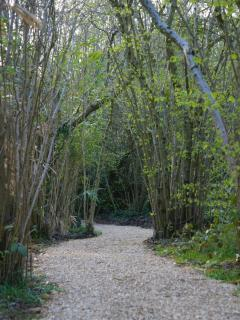 Woodland path leading to Treehouse