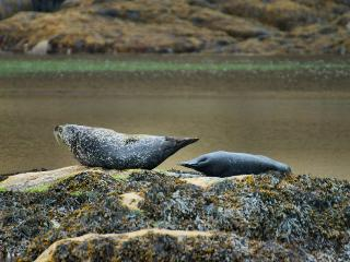 Seals below the house