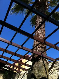 La palma del giardino