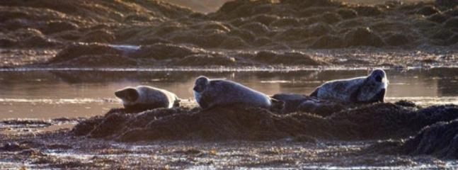 Local sealife