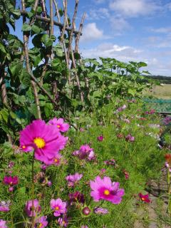 Byre Cottage Garden Produce