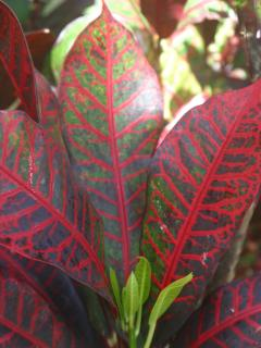 New and Old Croton