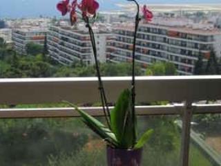 Repas sur le balcon vue mer panoramique .