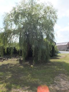 The old willow stands guard to the entrance and provides shade for the picnic