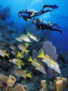 Great underwater photography