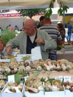 truffle market at Alba