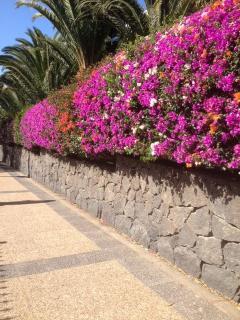 The lovely walk way to Playa Dorada Beach