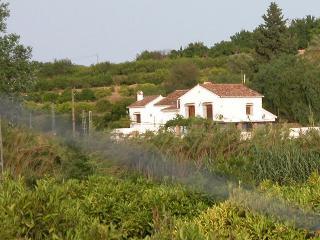 House and orange grove
